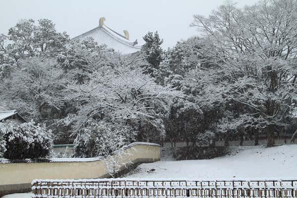 雪化粧の東大寺2