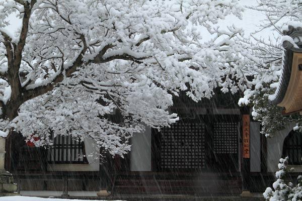 雪化粧の東大寺4