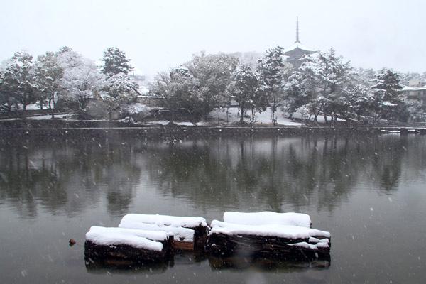 興福寺 雪景色1