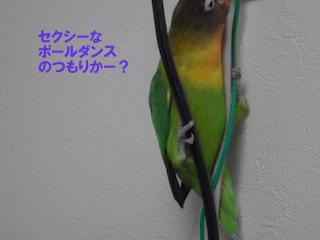 IMGP0348.jpg