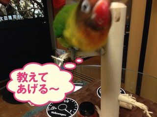 IMG_4331.jpg