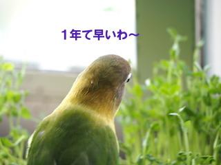 PA270021.jpg