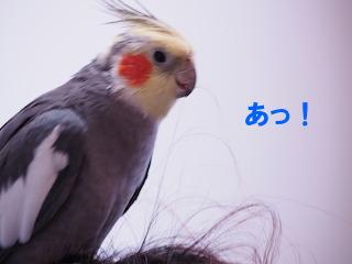 PA280026.jpg