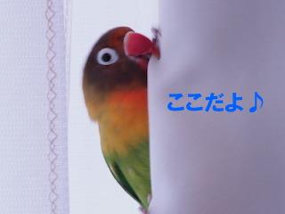 PA280059.jpg