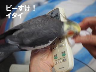 PB210038.jpg