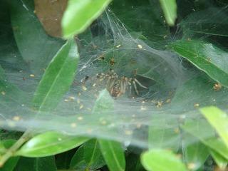 83N83T83O8382草蜘蛛の巣