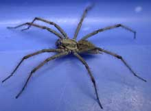 kusagumo178草蜘蛛