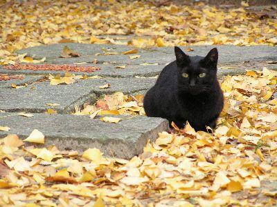 k0655黒猫