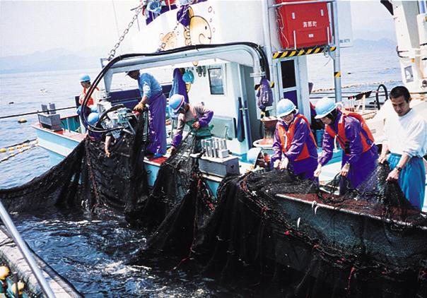 352鰤網漁