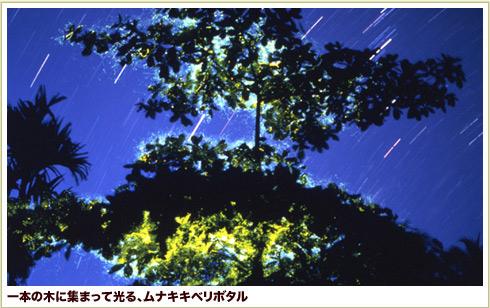 img_no10_01.jpg