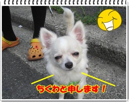 IMG_0286.jpg