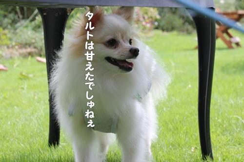 IMG_6645.jpg