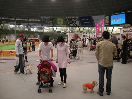 スーパードッグカーニバル2011 メイン会場