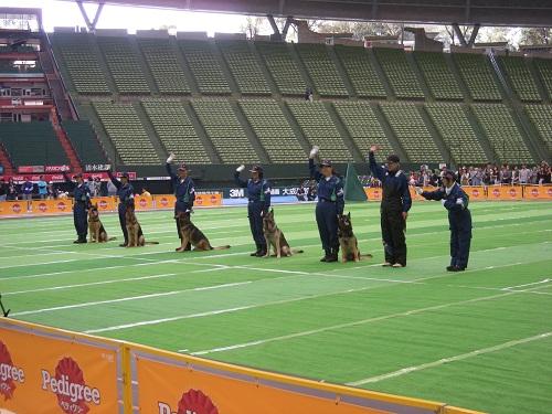 スーパードッグカーニバル2011 警察犬