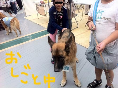 スーパードッグカーニバル2011 スタッフ犬