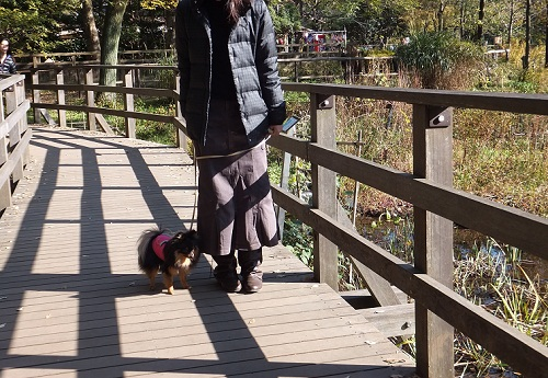 公園散歩3
