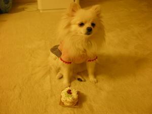 toeと犬ケーキ