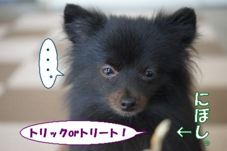 20111101_5.jpg