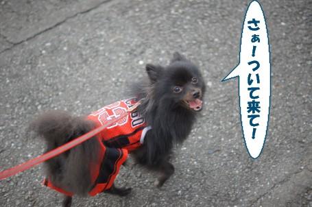 20111103_4.jpg