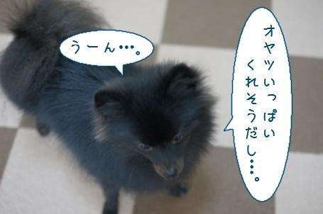 20111109_4.jpg