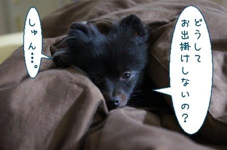 20111113_1.jpg