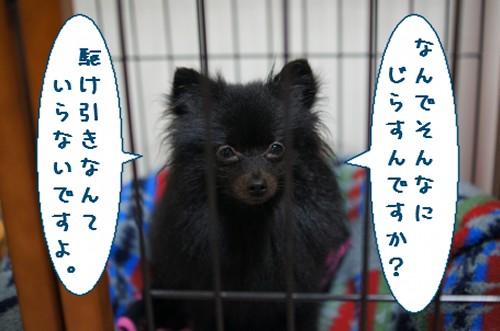 20111128_4.jpg
