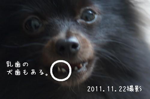 20111130_3.jpg