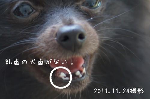 20111130_5.jpg