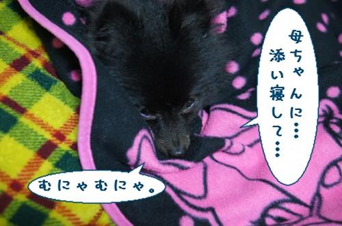 20111206_5.jpg