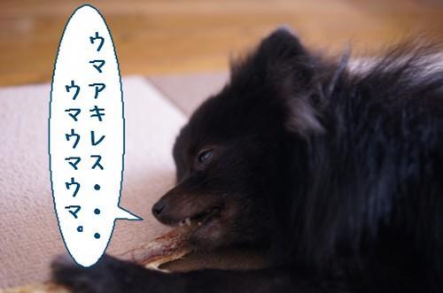 20111217_3.jpg