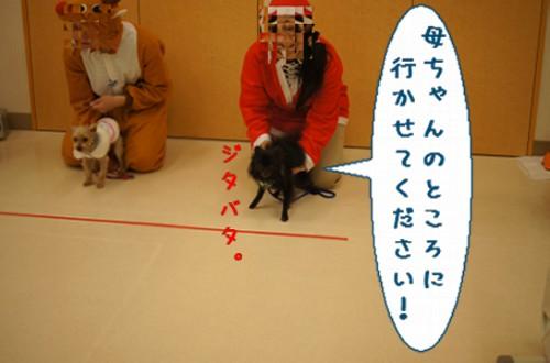 20111226_4.jpg