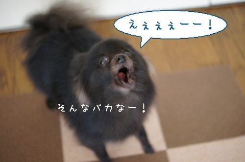 20120131_5.jpg