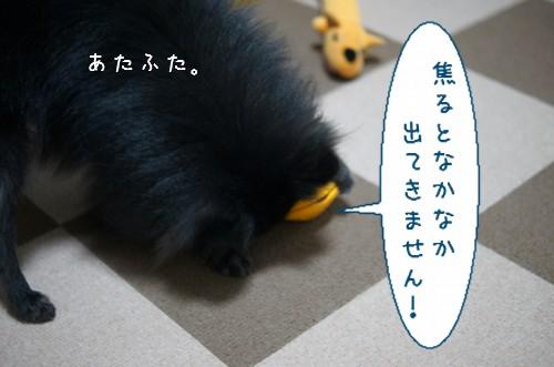 20120214_4.jpg