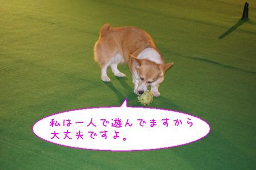 20120227_4.jpg