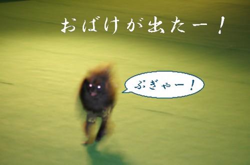 20120227_7.jpg