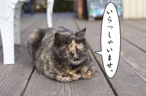 20120301_2.jpg