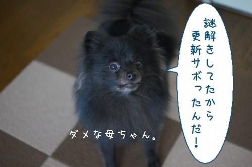 20120312_2.jpg
