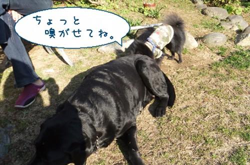 20120314_4.jpg