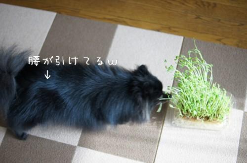 20120320_8.jpg