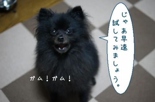 20120423_6.jpg