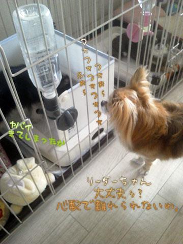 NEC_0005_201308130828567e1.jpg