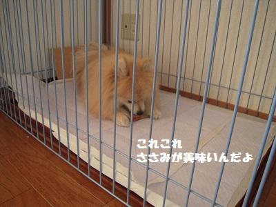 DSCN0649_convert_20101120160922.jpg