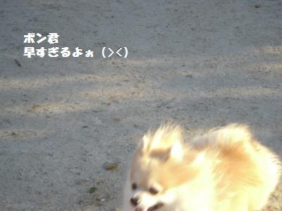 DSCN0663_convert_20101120165258.jpg