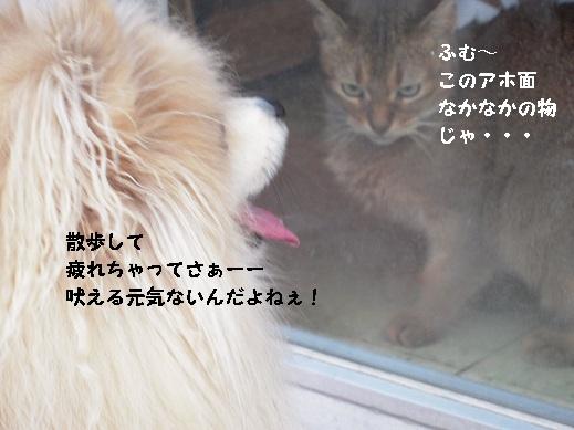 DSCN0968.jpg