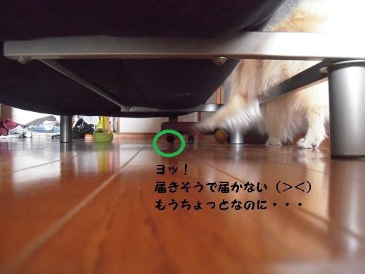 DSCN0979_20110205214159.jpg