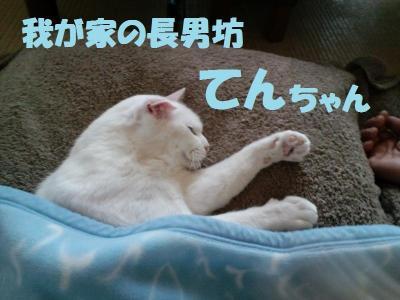 261_convert_20110902195736.jpg