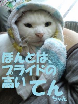 289_convert_20110902202758.jpg