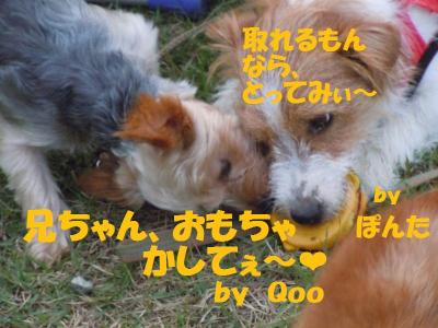 DSCN1976_convert_20110830180854.jpg