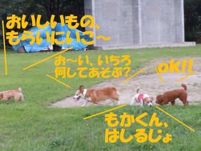 DSCN1979_convert_20110830180924.jpg
