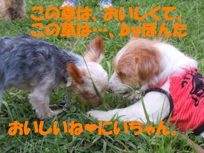 DSCN1987_convert_20110830180958.jpg